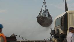 HD2009-11-13-33 unloading tuna Stock Video Footage