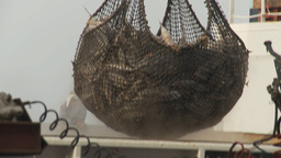 HD2009-11-13-37 unloading tuna Stock Video Footage