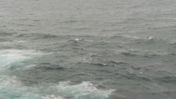HD2009-11-14-11 porpose at sea Stock Video Footage