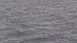 HD2009-11-14-13 porpose at sea Stock Video Footage