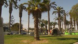 HD2009-11-18-54 Arica traffic palms Stock Video Footage
