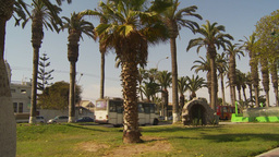 HD2009-11-18-54 Arica traffic palms Stock Video Footage