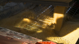 HD2009-10-6-27 grain truck mustard seed into auger Stock Video Footage