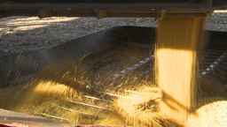 HD2009-10-6-29 grain truck mustard seed into auger Footage