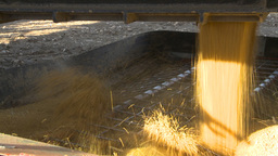 HD2009-10-6-29 grain truck mustard seed into auger Stock Video Footage