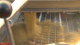 HD2009-10-6-34 grain truck mustard seed into auger Stock Video Footage