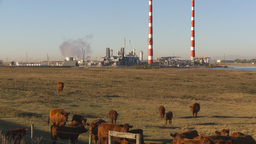 HD2009-9-31-17 cattle and gas plant Stock Video Footage