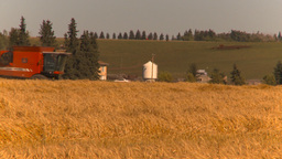 HD2009-9-32-13 grain harvest combine Footage