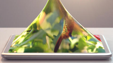 tablet pc and humming-bird Animation