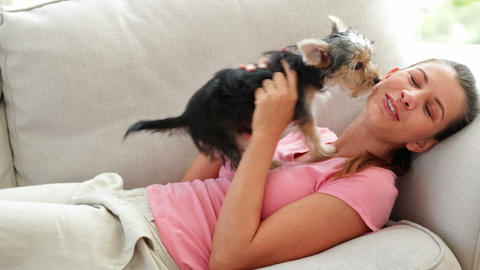 Laughing Woman Playing With Yorkshire Terrier Pupp stock footage