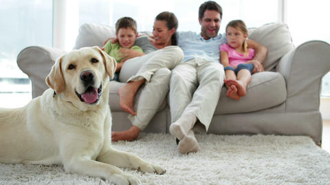 Cute family relaxing together on the couch with th Footage