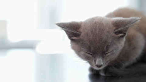 Little Grey Kitten Sitting On The Vets Table stock footage