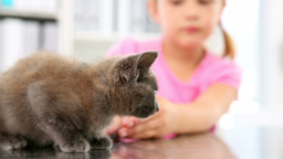 Little Girl Playing With A Grey Kitten stock footage
