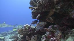 Scuba Divers Footage