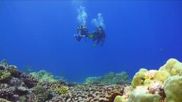 Underwater footage of a Shark Footage