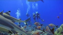 Shark Underwater Footage stock footage