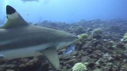 Underwater Stock Footage Footage