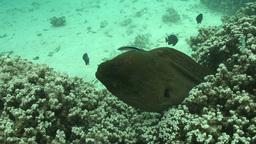 Underwater Stock Footage stock footage