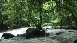 Stock Footage Tropical River Rapids Footage