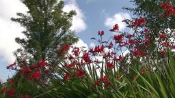 Stock Footage Flowers in Bloom Footage