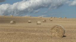 Stock Footage A Corn Field 3 Footage