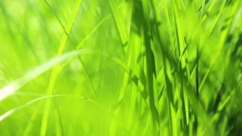 Spring Grass with Sunbeams HD Footage