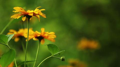 Summer Flowers HD Footage