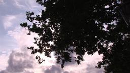 Autumn Sky Footage