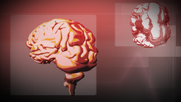 Animation of the Human Brain Animation