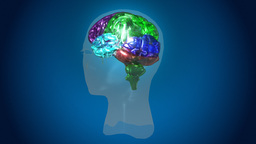 Animated High Definition 3D Human Brain Footage