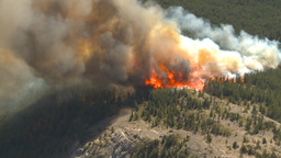 HD2009-9-37-9 Forest fire big flames aerial Stock Video Footage