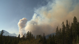 HD2009-9-38-4 forest fire Stock Video Footage