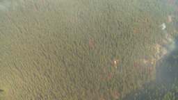 HD2009-9-39-2 aerial forest fire helo torcher Stock Video Footage