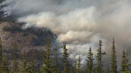 HD2009-9-39-12 forest fire heavy smoke Stock Video Footage