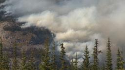 HD2009-9-39-12 forest fire heavy smoke Footage