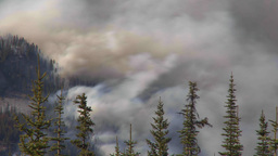 HD2009-9-39-16 forest fire heavy smoke TL Stock Video Footage