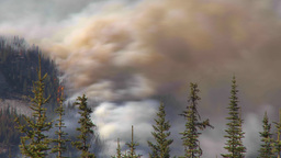 HD2009-9-39-16 forest fire heavy smoke TL Footage