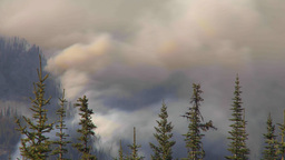 HD2009-9-39-16 forest fire heavy smoke TL Stock Video Footage