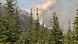 HD2009-9-40-2 forest fire thru trees Stock Video Footage
