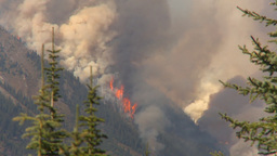 HD2009-9-40-4 forest fire thru trees spectacular Footage