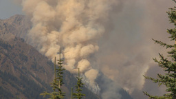 HD2009-9-40-6 forest fire thru trees spectacular Stock Video Footage
