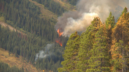 HD2009-9-40-14 forest fire audio chatter Stock Video Footage