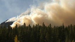 HD2009-9-40-16b forest fire Stock Video Footage