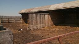 HD2009-9-41RC-1 farm cat Stock Video Footage