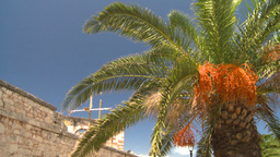 HD2008-8-12-24 Bermuda old fort and palm tree Stock Video Footage