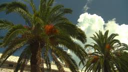 HD2008-8-12-48 Bermuda old town palms Stock Video Footage