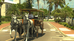 HD2008-8-12-62 Bermuda old town horse and bugy Stock Video Footage