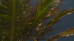 HD2008-8-14-18 San Juan palms breeze Stock Video Footage
