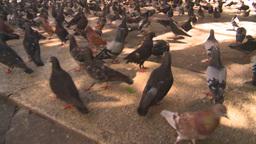 HD2008-8-14-44 San Juan old town pidgeons Footage