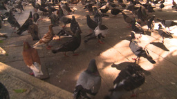 HD2008-8-14-44 San Juan old town pidgeons Stock Video Footage